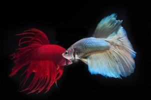 Fisch bekämpfen