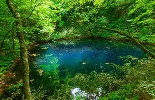 Shirakami-Sanchi in Aomori, Japan foto
