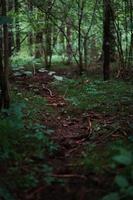 getrocknete Blätter auf dem Boden, umgeben von Bäumen