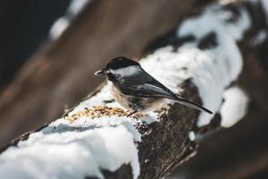 Vogel thront auf Baum mit Schnee