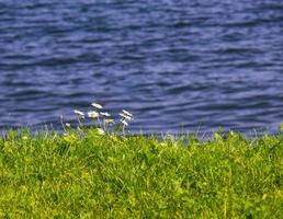 kleine Blumen am Rande einer Seelandschaft
