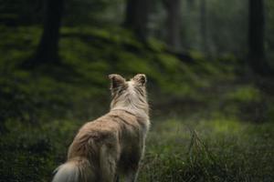 brauner langer beschichteter Hund auf grünem Gras während des Tages