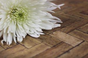 weiße Blume auf Holzoberfläche foto