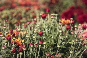 rote und orange Blüten