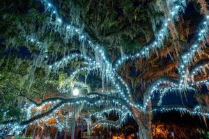Weihnachtsbeleuchtung an Bäumen foto