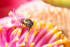 Insekt auf einer bunten Blume foto