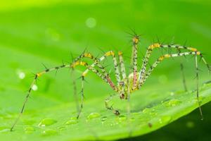 grüne Spinne auf einem Blatt