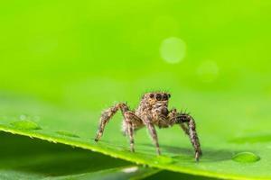 braune Spinne auf grünen Blättern