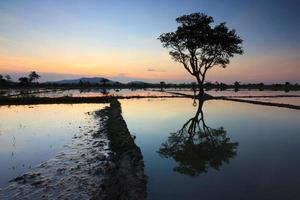 einzelner Baum bei Sonnenuntergang in Sabah, Borneo, Malaysia