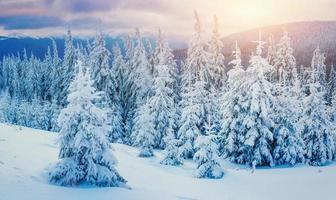Winterlandschaft im Sonnenlicht. dramatische winterliche Szene. Wagen