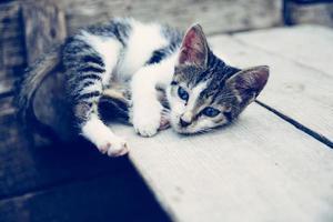 Schwarzweiss-getigertes Kätzchen, das auf brauner hölzerner Oberfläche liegt