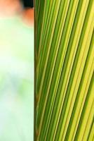 grüne und gelbe abstrakte Pflanze