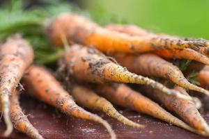 frisch gepflückte Karotten