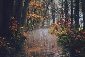 Herbstszene mit einem Bach
