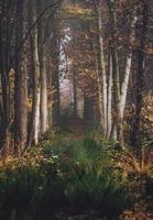 schöner Herbstweg