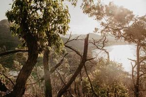 goldene Stunde auf grüner Landschaft foto
