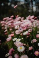 Nahaufnahme von rosa und weißen Blumen