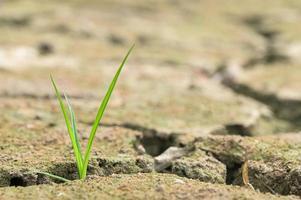 Pflanze in den trockenen Boden