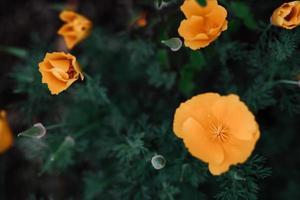 gelbe Blume mit Wassertropfen foto