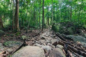 Bäume im Wald in Thailand foto