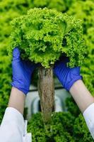 Salat mit Handschuhen halten