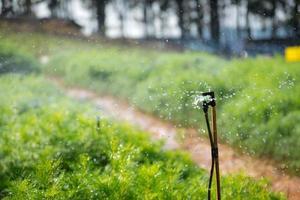 zum Gießen von Pflanzen bestreuen