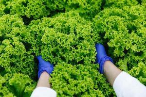 Frau in blauen Handschuhen hält grünen Salat in den Armen