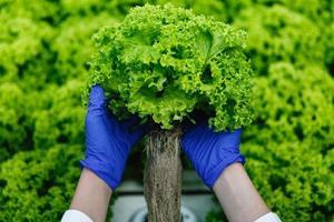 Frau in blauen Handschuhen hält grünen Salat