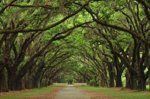 Allee der Eichen, historische Warmsloe Plantage foto