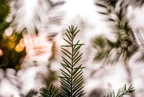 Nahaufnahme von grünen Blättern im Wald