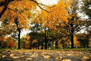 gelbe Blätter fallen in Kansas