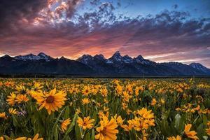 Tetons und Wildblumen bei Sonnenuntergang foto