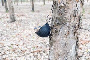 Plastikbecher hängen an Bäumen