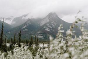 Berglandschaft tagsüber