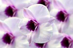weiße Orchidee auf weißem Hintergrund.