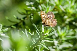 brauner und weißer Schmetterling auf grüner Pflanze foto