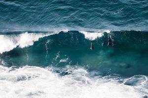 Delfine in einer Welle