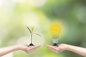 Hände halten Glühbirne und Pflanze foto