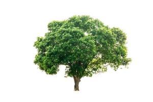 grüner Naturbaum lokalisiert auf weißem Hintergrund foto