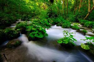 Oirase-Keiryu-Stream