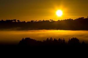 Silhouette der Bäume zur goldenen Stunde