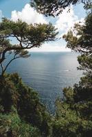 grüne Bäume über dem Gewässer während des Tages