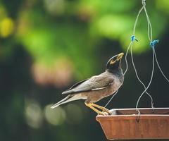 Vogel auf einem Vogelhäuschen