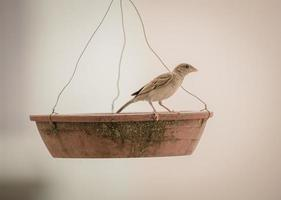 brauner Vogel auf einem Vogelhäuschen