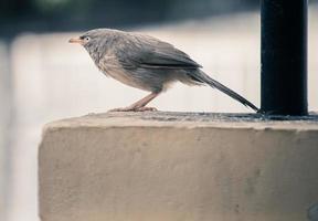 grauer Vogel auf Beton
