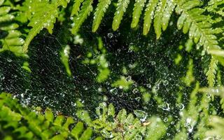 Wassertropfen im Spinnennetz