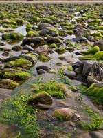 schleimige Kieselsteine am Strand