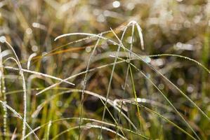Tau und Raureif auf Gras im Herbstmorgen
