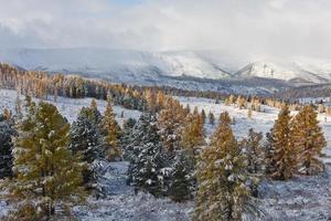 erster Schnee foto