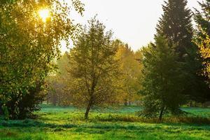 Herbstnatur der Bäume und strahlende Sonne foto